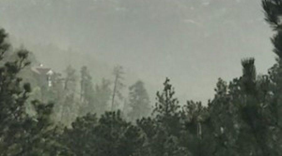 Pine pollen heavy in Black Hills, how to get relief