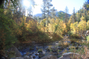 Final 2020 Spearfish Canyon Fall Color report