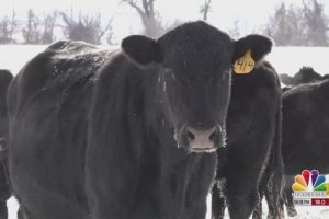Cattle reform bill would allow sale of state inspected beef across state lines