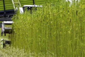 SDDA Industrial Hemp Plan approved by the USDA