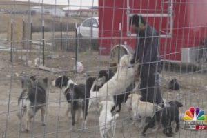 Fire strikes Pine Ridge Indian Reservation animal shelter, owner seeks rebuild