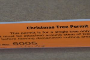 Black Hills National Forest Christmas Tree Permits now available