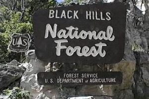 BHNF partners with Wyoming to 'treat the forest'