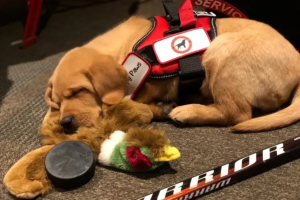 Rapid City Rush team dog to be introduced to veteran on Saturday night