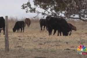 Thune reintroduces bipartisan legislation to expand, strengthen local meat processing capabilities