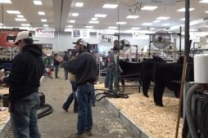 Cattle producers make most of Angus Show & Sale