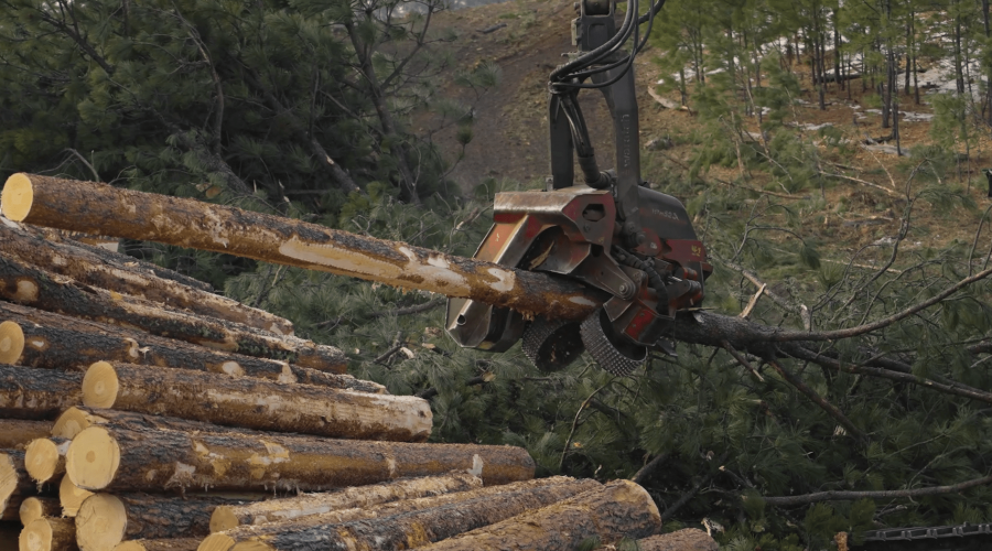 HOMEGROWN, Episode 5: Pines to Planks