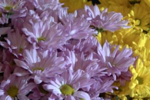Flower Power gesture sends delivery of cheer
