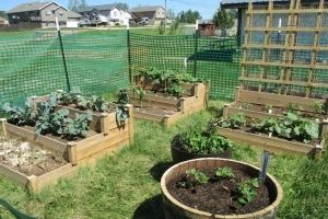 Live Well Black Hills extends outreach to childcare gardens program