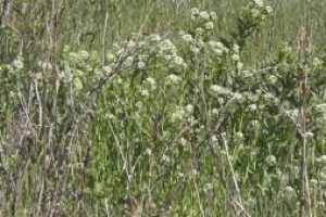 The time for weeding spraying is upon us, here's how to get ahead