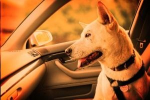 Warmer weather prompts reminder: don't leave kids or pets in the car