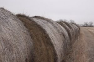 Noem executive order expands access to livestock feed during drought conditions