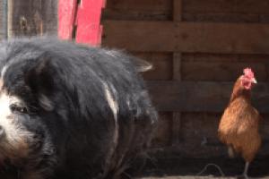 Charm Farm offers summer fun for families