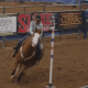 HOMEGROWN Table Talk, Episode 7: Amateur Rodeo