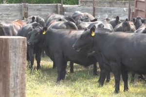 Agriculture producers optimistic as wait begins following Biden executive order