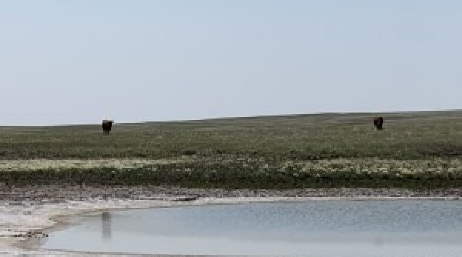 Another blow to our nation's ranchers – one with potentially deadly consequences for cattle