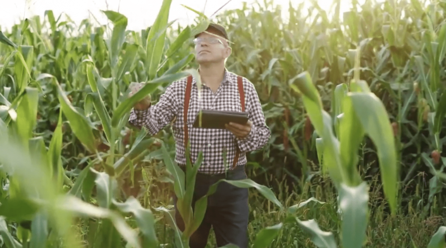 Homegrown Presents Episode 4: Soil Health