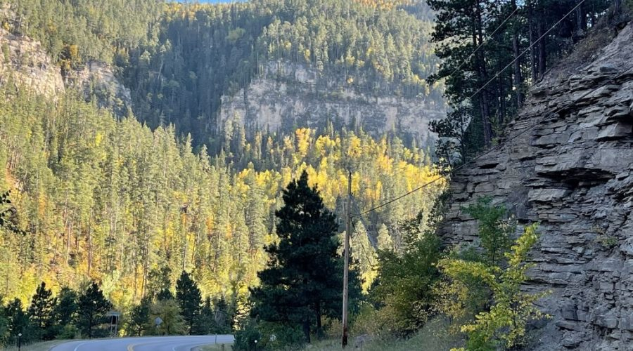 Looking for fall color? Check out some of our favorite places in the Black Hills!