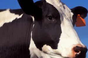 American Beef Labeling Act to reinstate mandatory origin labeling